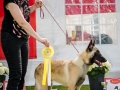 BIS Puppy competition